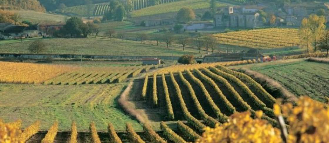 image__header__vinedos-de-cognac-y-pineau-des-charentes__va-0086-credit-remy-martin-cognacjpg