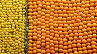 在蔚蓝海岸地区的芒通,柑橘类水果是柠檬节上的明星。