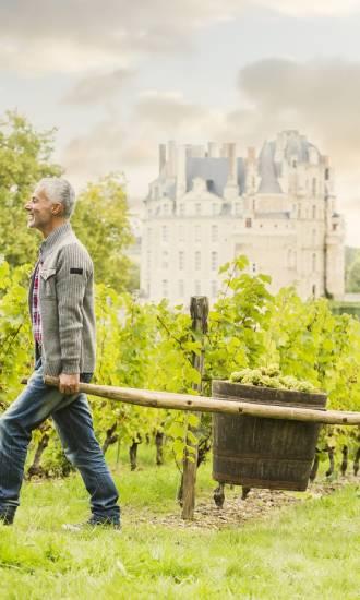Vignoble Château Brissac Val de Loire Mike Kemp GettyImages-605762931