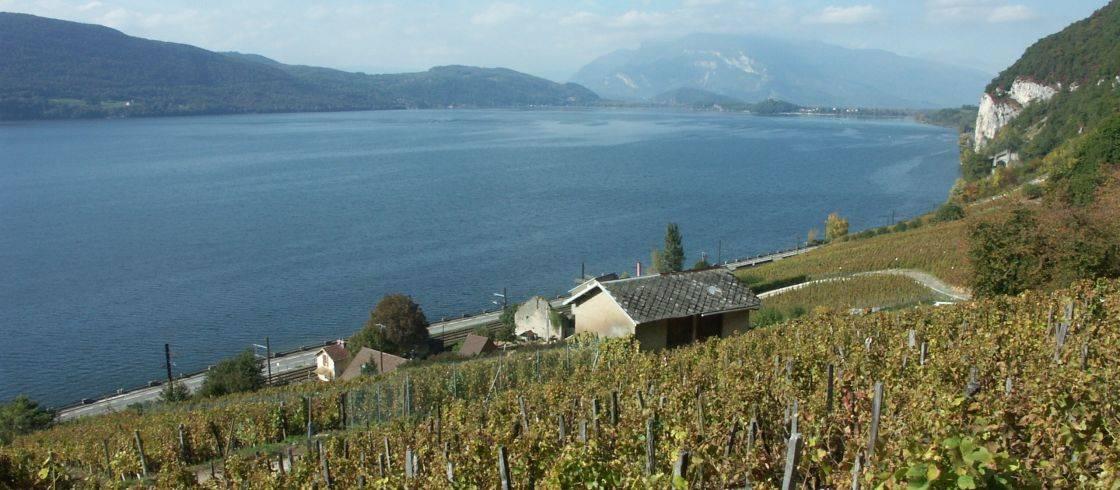Las viñas de Chautagne, dominando el lago de Bourget.