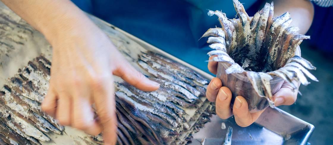 Resultado de imagen de anchoas de collioure