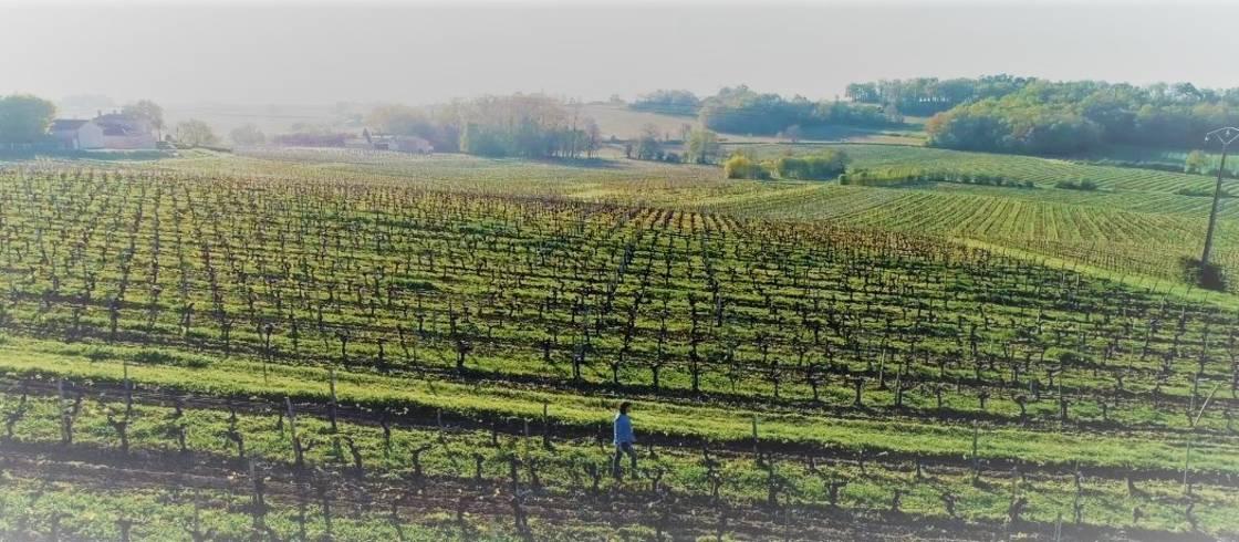 Rachel Hubert, vigneronne bio au milieu des vignes du domaine familial à Blaye près de Bordeaux.