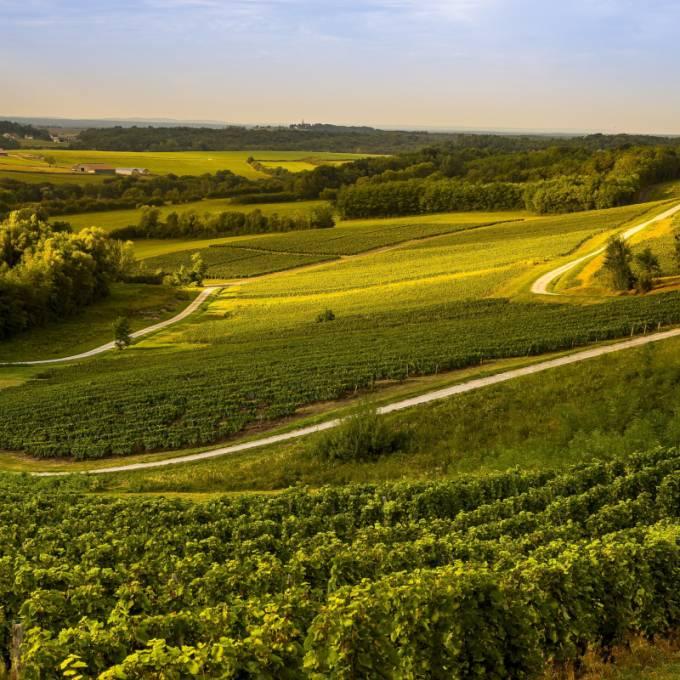 Bli Klokare Pa Franska Viner Fran Jura France Fr