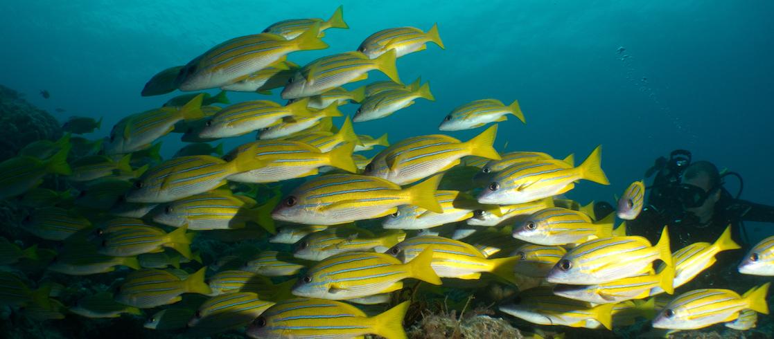 incontri siti Canada pesce incontri 1 Corinzi