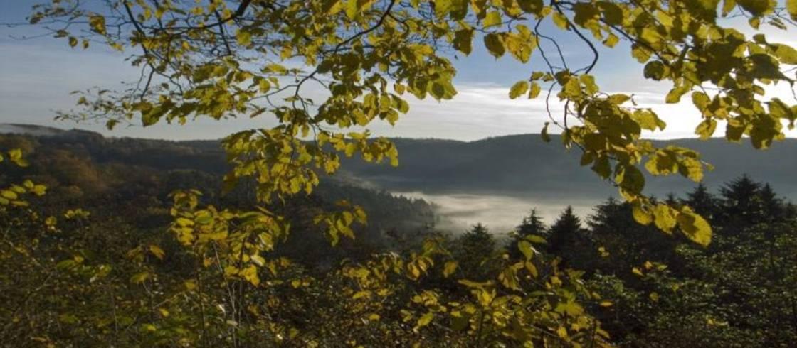 image__header__parque-natural-regional-de-los-vosgos-del-norte-destino-eden__pnrvn-paysageautomne-cr-sycoparcjpg