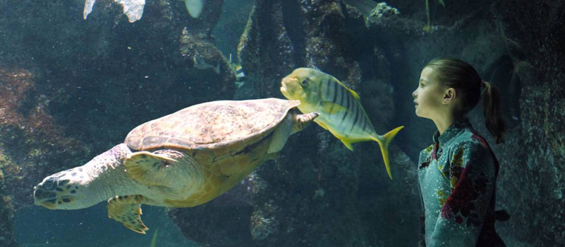 Tortues et enfant c AquariumLaRochelleSAS-1280