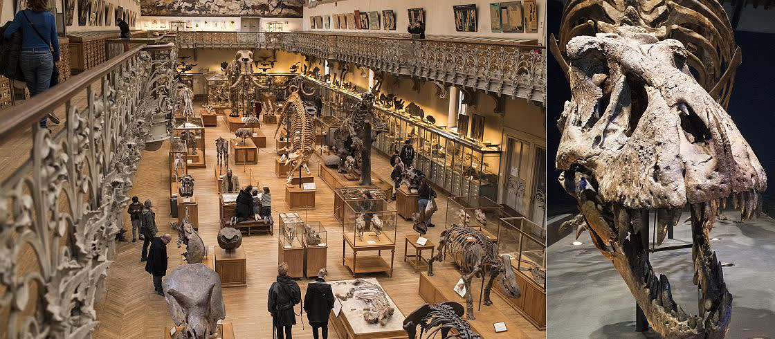 """Ausstellung """"Ein T-Rex in Paris\"""