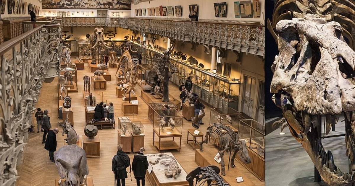 El Jardin des Plantes alberga la exposición Un T-Rex en París.