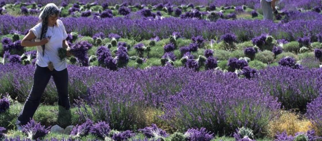 image__header__la-provenza-un-destino-natural-excepcional__20097928-2jpg