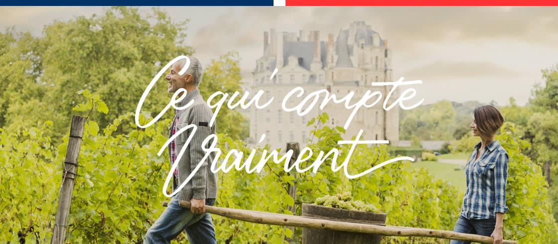 Vignoble du château de Brissac dans le Val de Loire